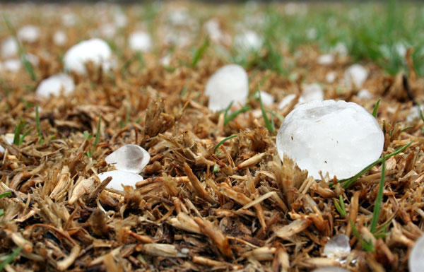 Hail in Grass